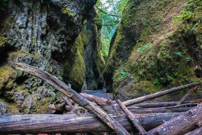 Oneonta Gorge travel logs