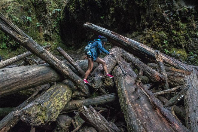 Oneonta gorge logs august beautiful