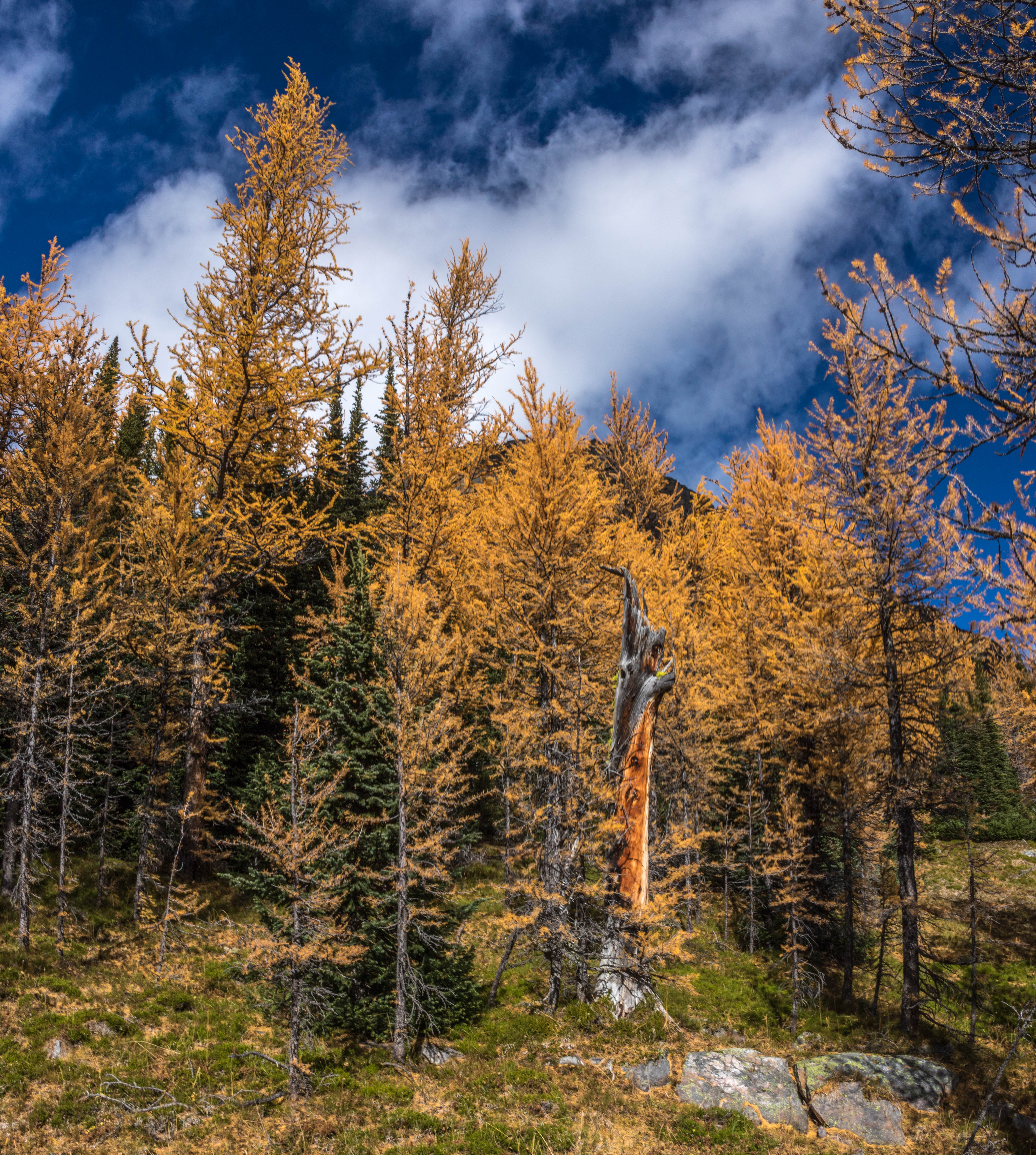 The Best Place To See Fall Colours In Banff