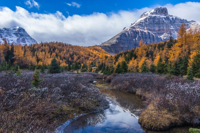 Larch Valley – Fall Colours in Banff