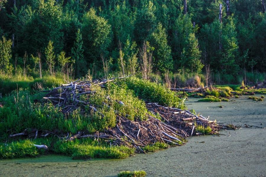 Elk Island National Park Edmonton